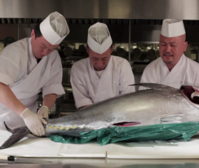 Video: chefs fileren een enorme tonijn