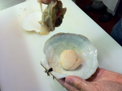 now-its-clean-but-the-nerve-still-attach-to-the-good-part-of-the-scallop-the-muscle