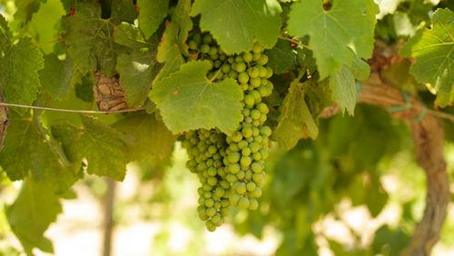 6-Wine_B0