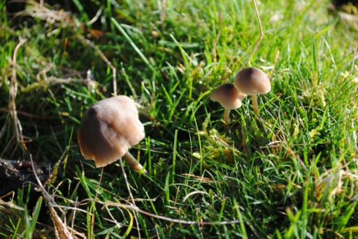 Mushroom hunting23