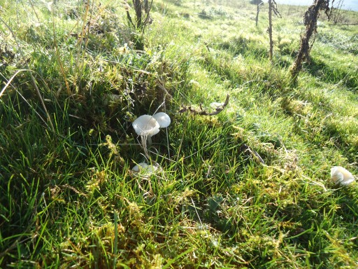 MushroomHunting.5