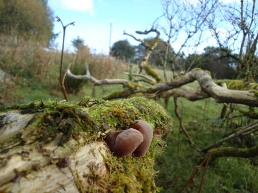 MushroomHunting14
