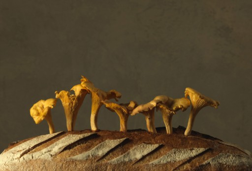 Marie Cecile Thijs - Food Series - Swedish Chanterelles On Bread - Courtesy Eduard Planting Gallery