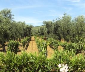 Culy Italia: de wijnen van Puglia