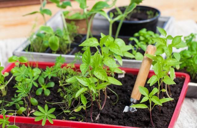 Plantenbak stock