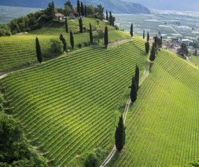Culy's Mr. Vino ontdekt… wijn in Südtirol - deel 2
