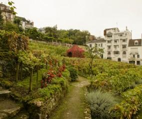 Tip van Mr. Vino: wijnfeest in de Parijse (!) wijngaard in Montmartre