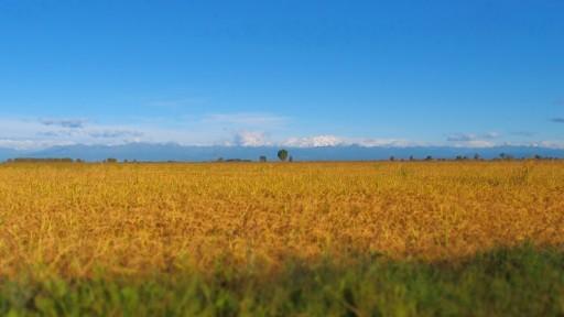 risotto_landschap_met_berg
