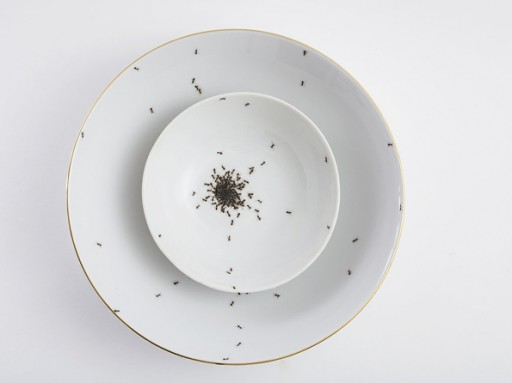 Porcelain-covered-with-ants-2