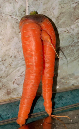sexualproduce14