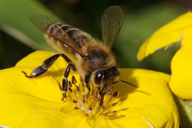 Alles over honing: van imker tot slinger - Culy.nl