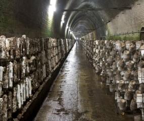 Bizar: een tunnel vol exotische paddenstoelen in Australië
