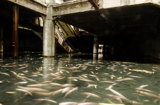 fish-shopping-mall-1_verge_super_wide