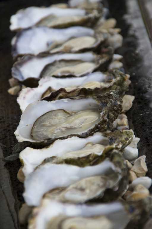 ierse oesters