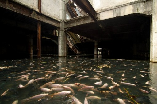 new-world-mall-fish.0_standard_1020.0