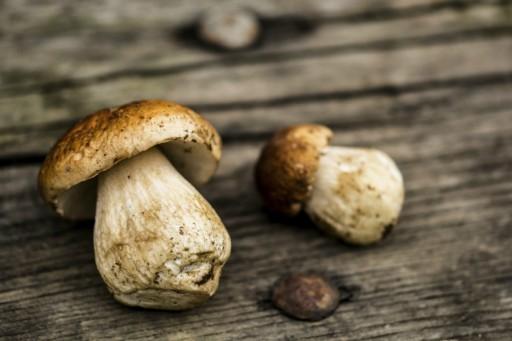 Boleten eekhoorntjesbrood paddenstoelen stock