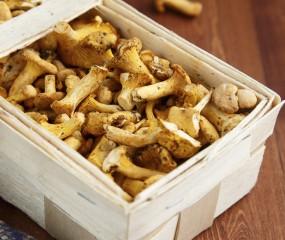 Het grote overzicht van paddenstoelen: van champignon tot shiitake