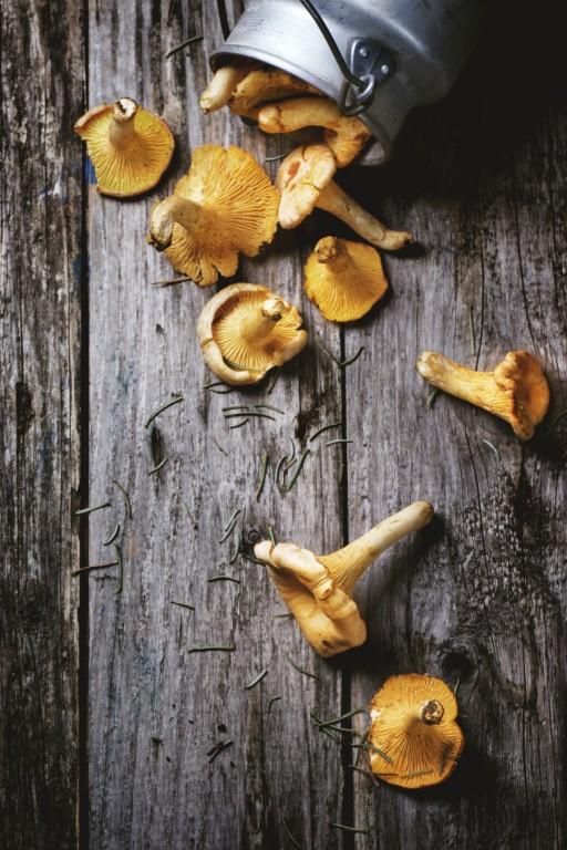 cantharellen paddenstoelen stock