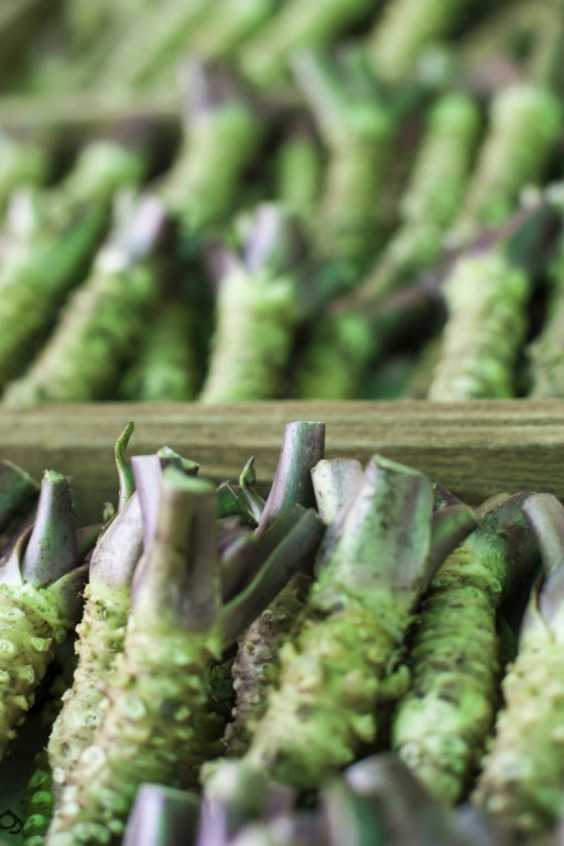 Wasabi stock