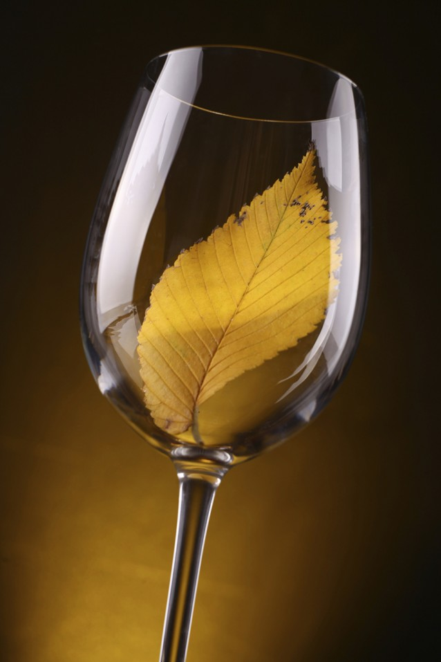 Yellow leaf in a glass