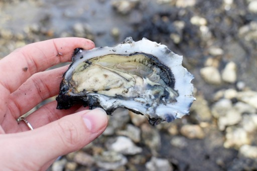 oesters0003