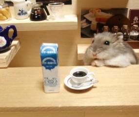 Té schattig: het leven van een hardwerkende culi hamster