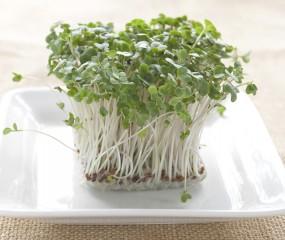 Kiemen zijn hot: maar er is méér dan alfalfa en tuinkers!