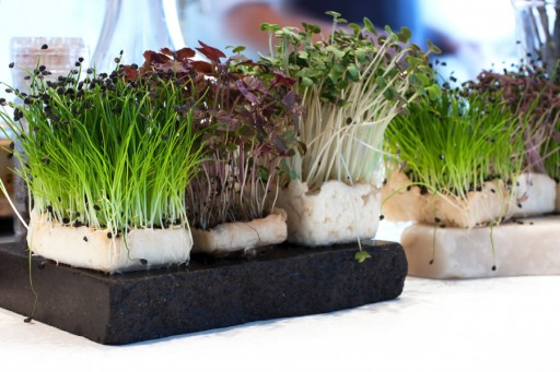 Stock microgroenten cress0003