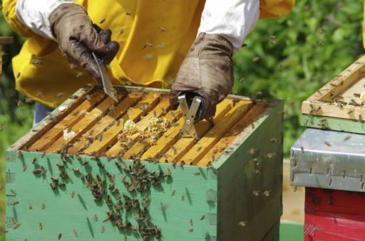 Bijen imker stock