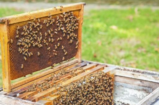 Bijen imker wespen honing stock