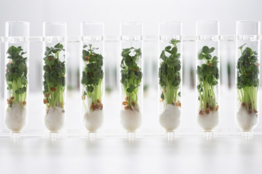 Stock microgroenten cress0002