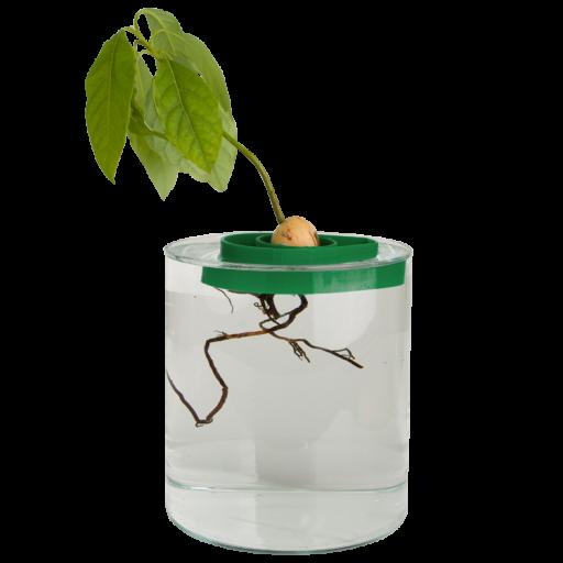 avoseedo_with_plant