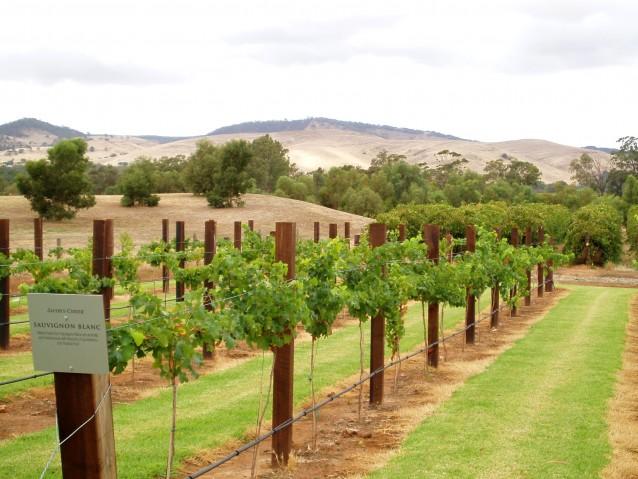 Barossa Valley, zuid Australië