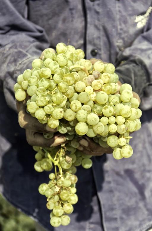 Stock witte wijn
