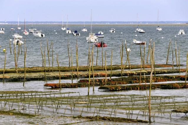 oester farm stock