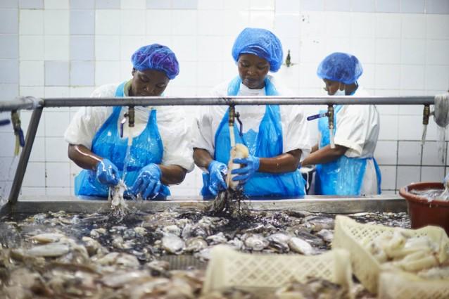 Visverwerkers maken de vis schoon
