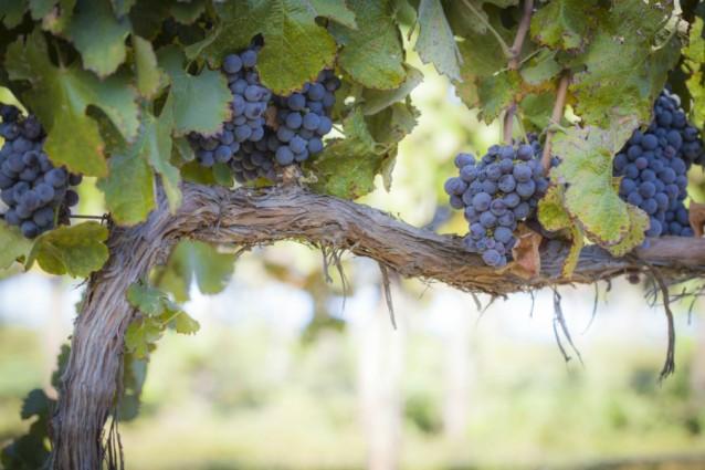 Wijngaard stock2