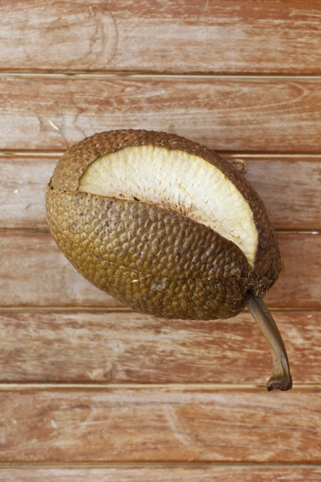 breadfruit Jamaicaans stock