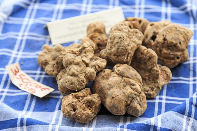 Witte truffel stock