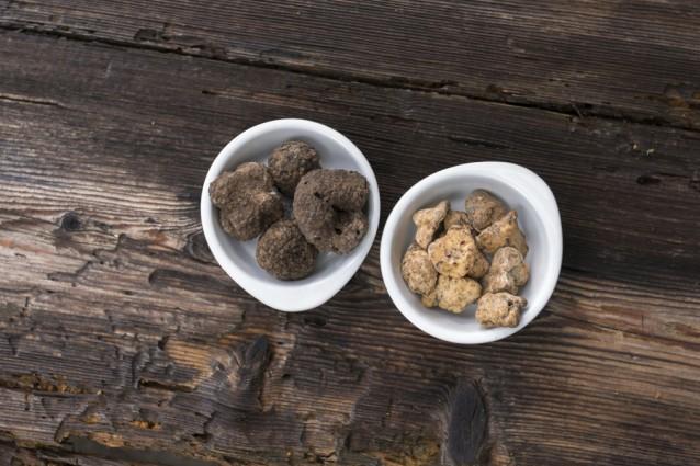witte en zwarte truffel stock