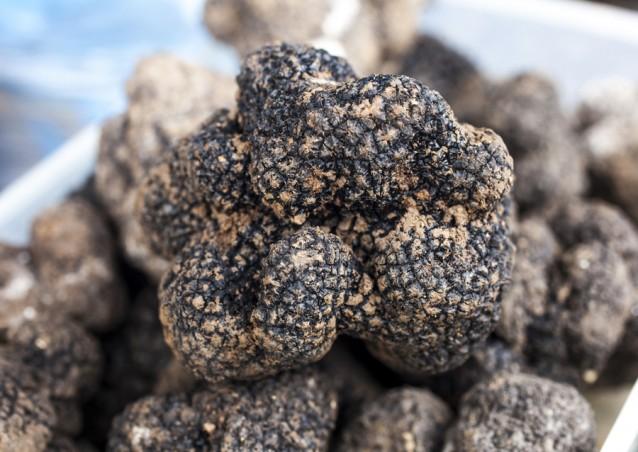 zwarte truffel stock3