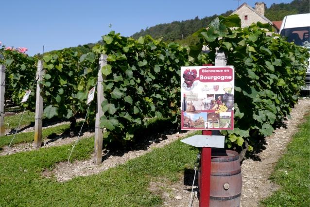 bourgogne-mr-vino0021