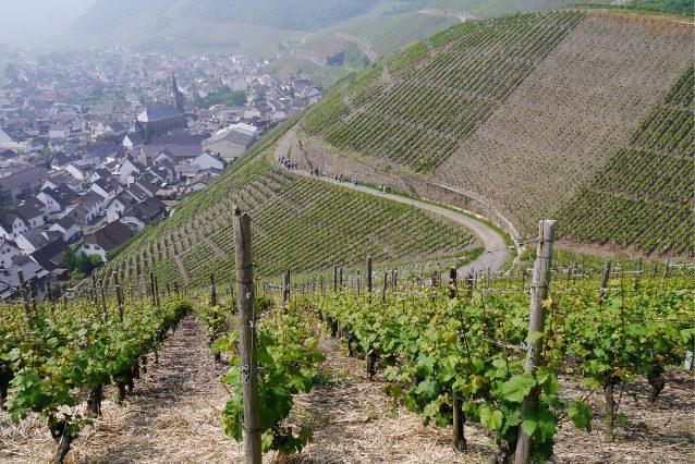 wijngebiedAhr