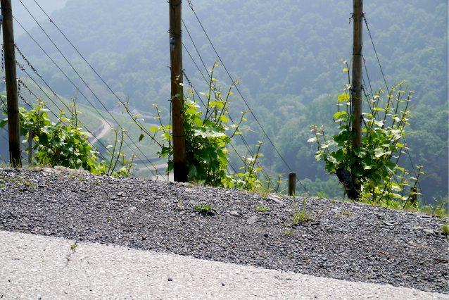 wijngebiedAhr3