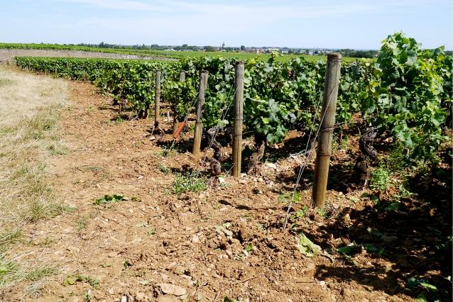 bourgogne-mr-vino0041