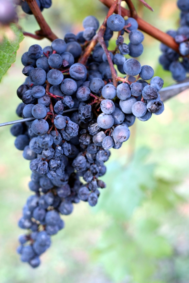 stock-barolo-wijn0002