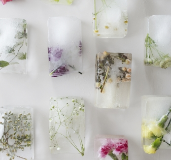 Flowers frozen into ice blocks laid out in lines on a white table.