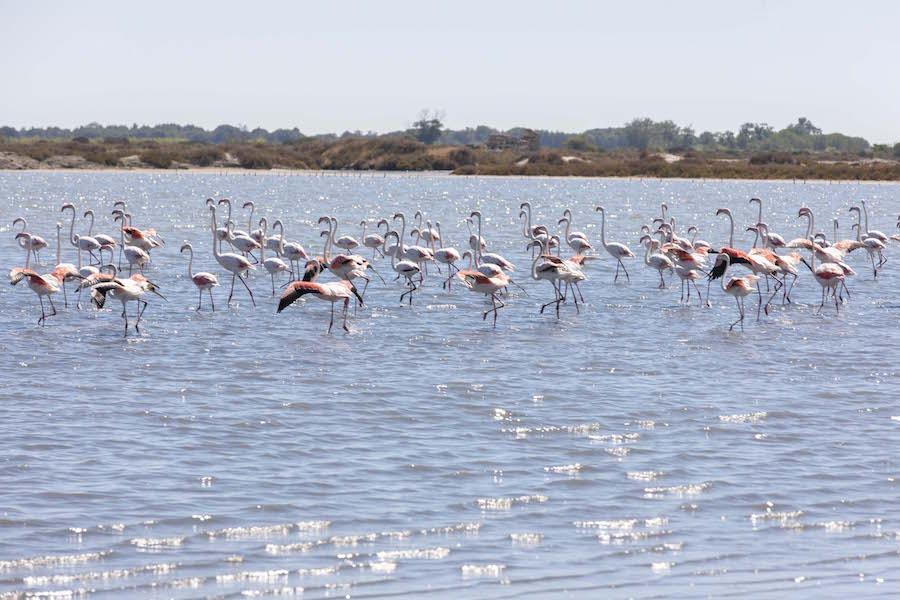 zout en flamingo's Camargue