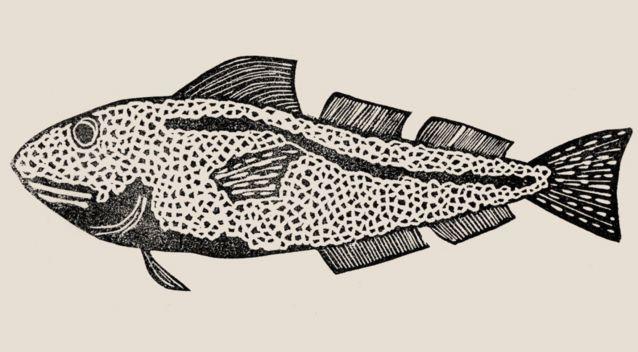 Buurvissen