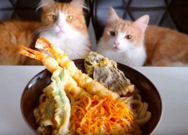 Jun's Kitchen Youtube